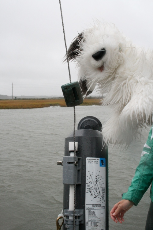 How much oxygen is in the water? What is the temperature? How salty is the water? Fluffy the Science Dog throws a special tool overboard to sample the water at the bottom of the sea. She releases a weight called a messenger to take water samples at different depths.