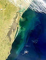 Sometimes there are so many tiny, microscopic plants called phytoplankton growing in one area of the ocean that they can be seen from space! When this happens we call it an algae bloom.