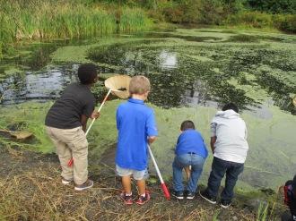 pond-boys