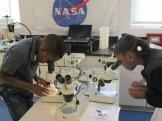 pond-microscopes